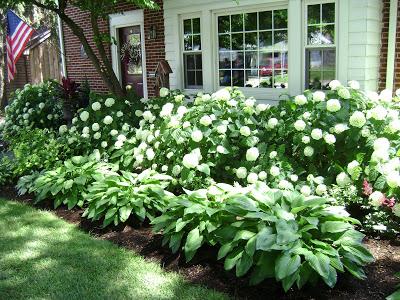 Hydrangea & Hosta – the perfect combination for low maintenance garden that is still striking