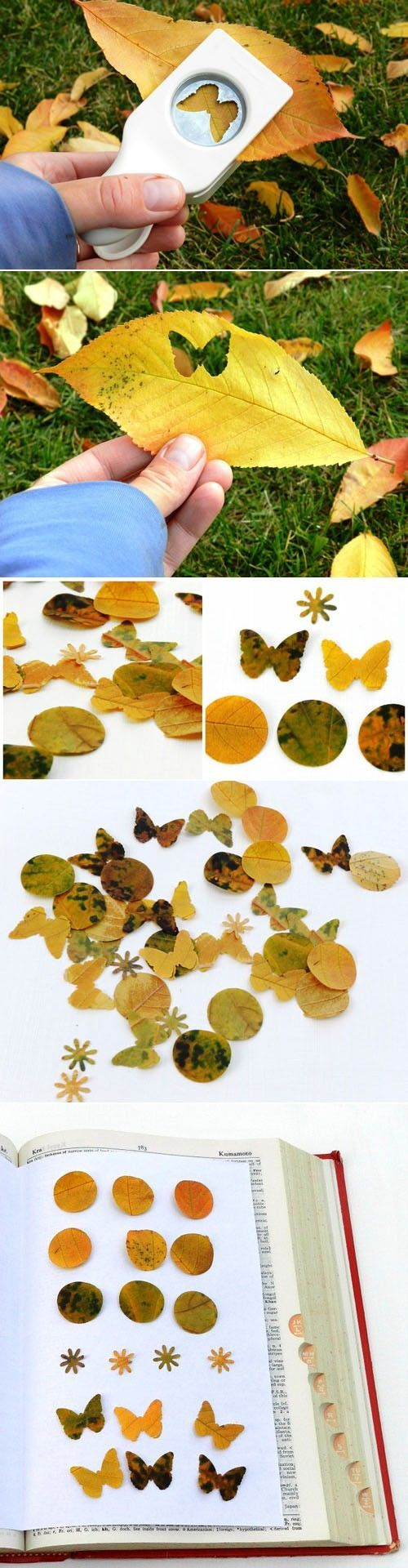 Collect the mark of autumn – share creative ideas for making plant leaves