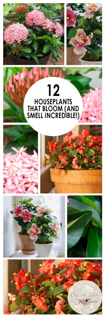 12 Houseplants That Bloom (And Smell Incredible!) | Houseplants That Bloom, Low Maintenance House Plants, Easy to Grow