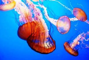 jelly fish - जीवधारी : लक्षण एवं वर्गीकरण | Organisms: Characteristics and Classification