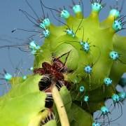 Про бабочек: вооружена и очень опасна