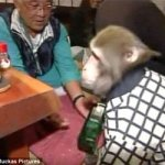 Planeta maimutelor. Varianta japoneza.