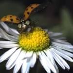 Natura, cu incetinitorul
