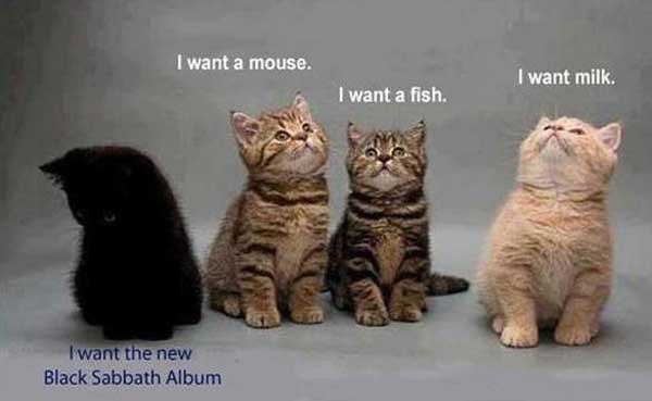 pisica-spion
