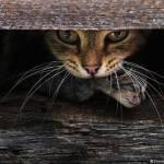 10 fotografii cu pisici
