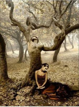 dragoste-copac