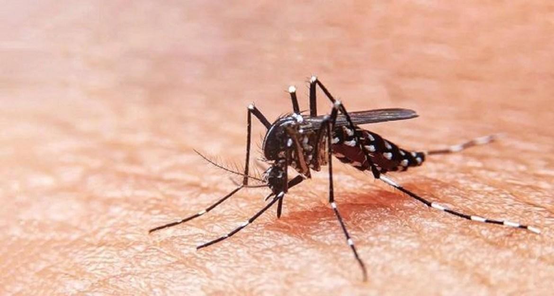 Todos a prevenir el dengue