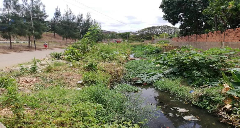 Basura, maleza y sedimentos en canal de drenaje