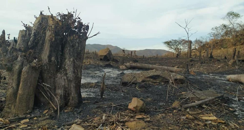 Uso de leña trajo devastación en zonas de Altagracia