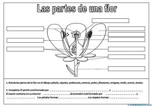 Partes de una flor-1