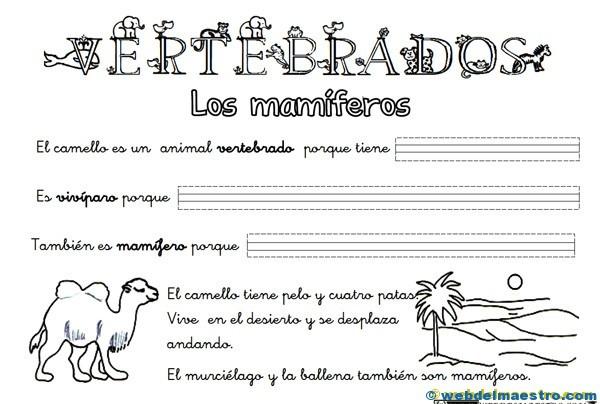 Animales vertebrados  Web del maestro