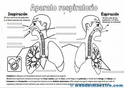 Aparato respiratorio primaria-1