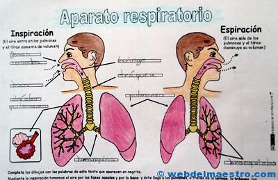 Aparato respiratorio primaria-2