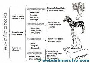 Resultado de imagen para imagen clasificación de los mamiferos