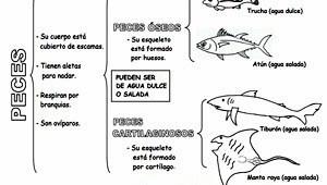 Animales vertebrados peces
