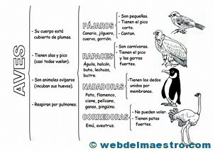 Animales-vetebrados- aves