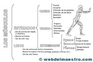 Sistema locomotor clasificación-2