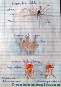 Animales invertebrados trabajos de alumnos