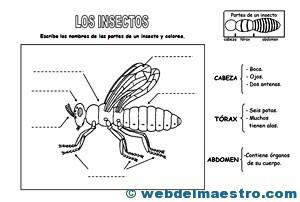 Animales invertebrados partes de un insecto
