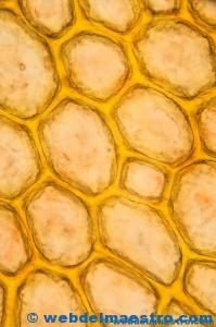 las primeras células-trozo de corcho