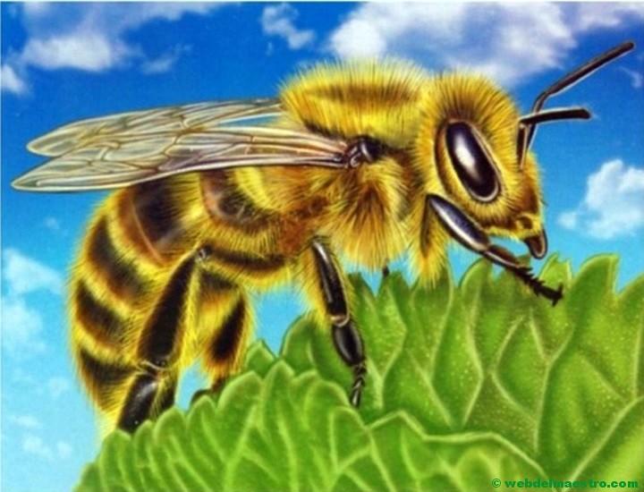 Dibujos De Insectos Web Del Maestro
