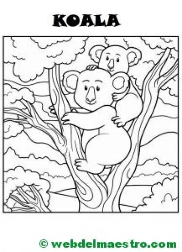 Koala con su cría-2