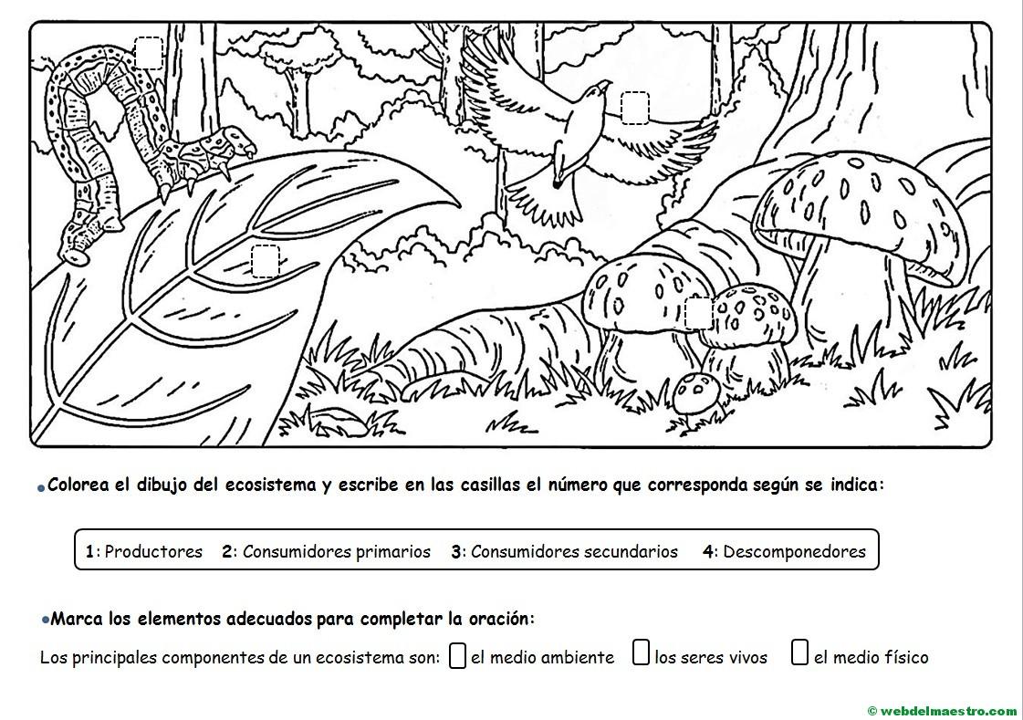 Dibujos De Animales Terrestres Para Colorear E Imprimir: Ecosistemas Para Colorear E Imprimir