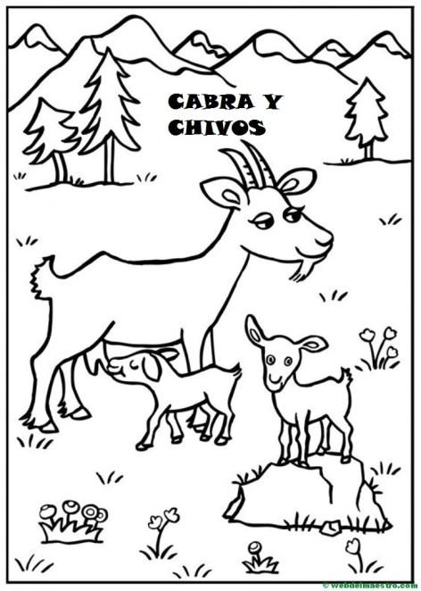 cabra y chivos