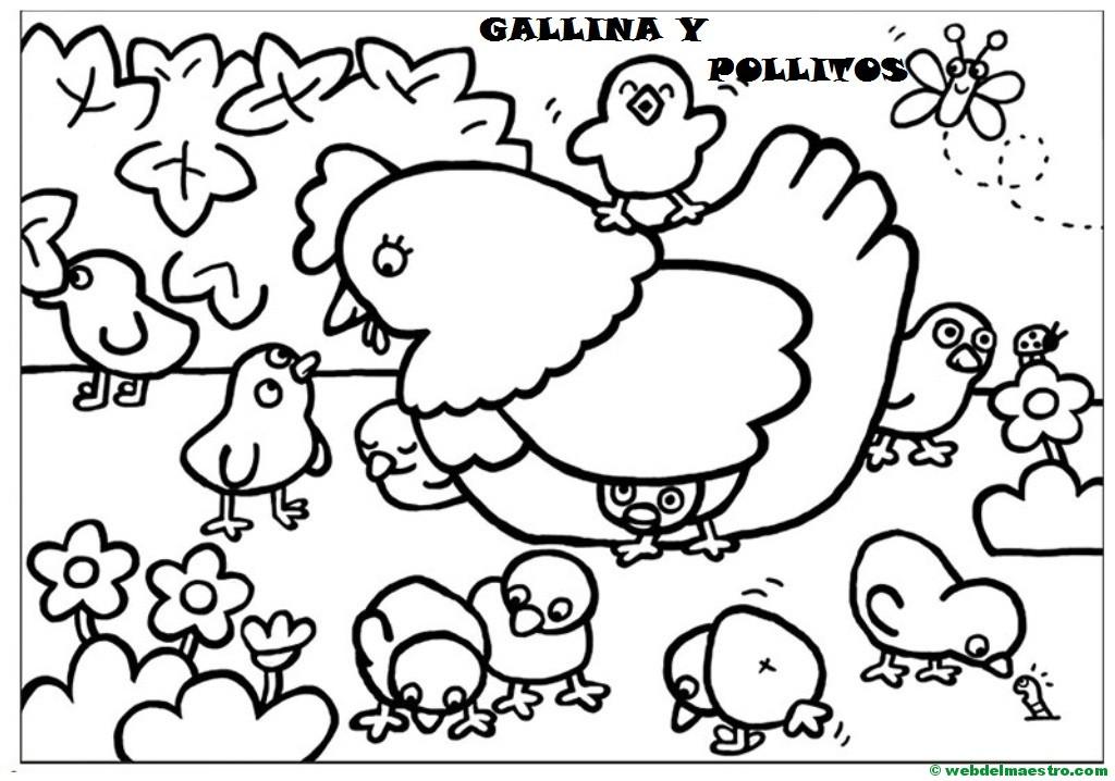 Gallina Y Pollitos Web Del Maestro