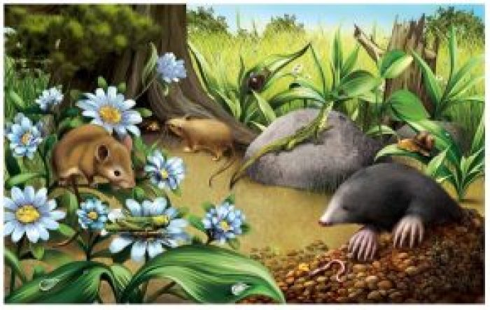 Animales del bosque-