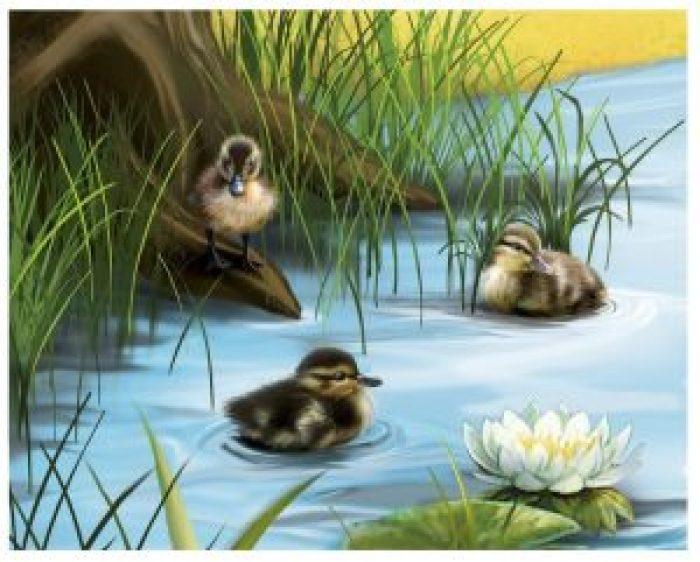 Pato silvestre-crías