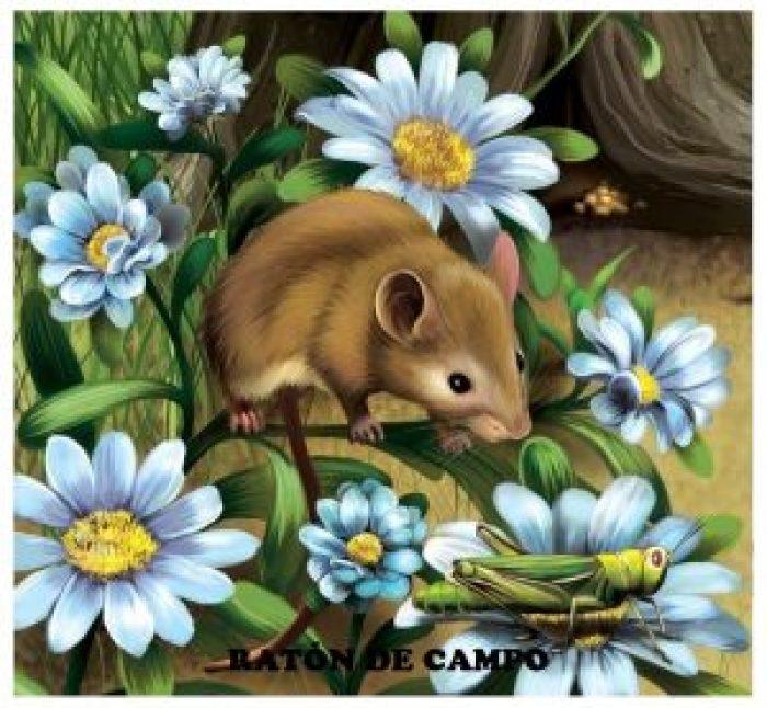 Ratón de campo-