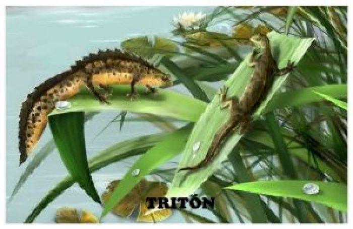 Tritón-