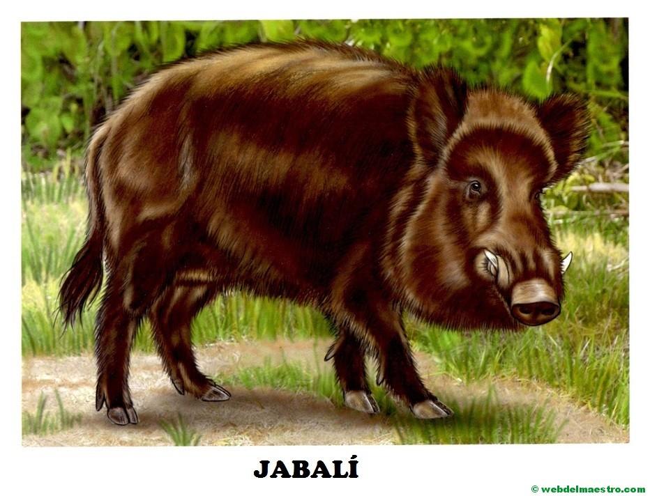 Dibujos De Animales A Color Para Imprimir: Dibujos De Animales Salvajes Para Imprimir