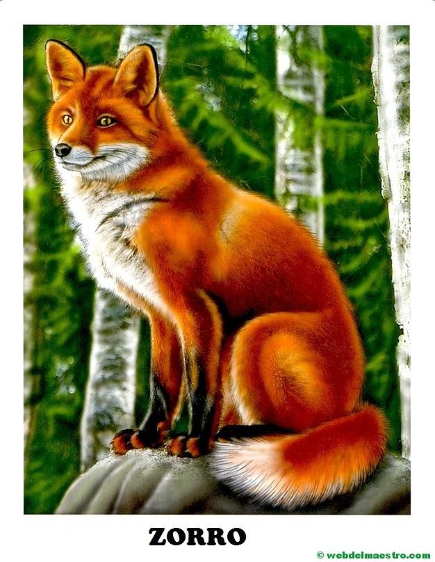 Dibujos de animales salvajes para imprimir - Web del maestro