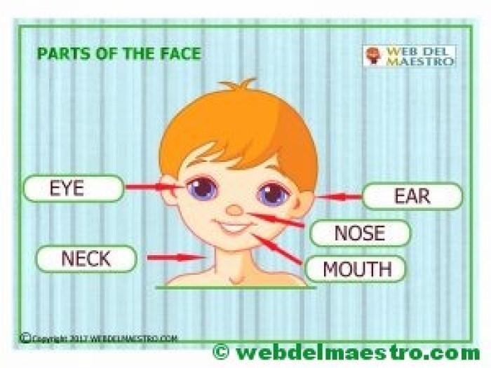 Partes del cuerpo en ingles-la cara