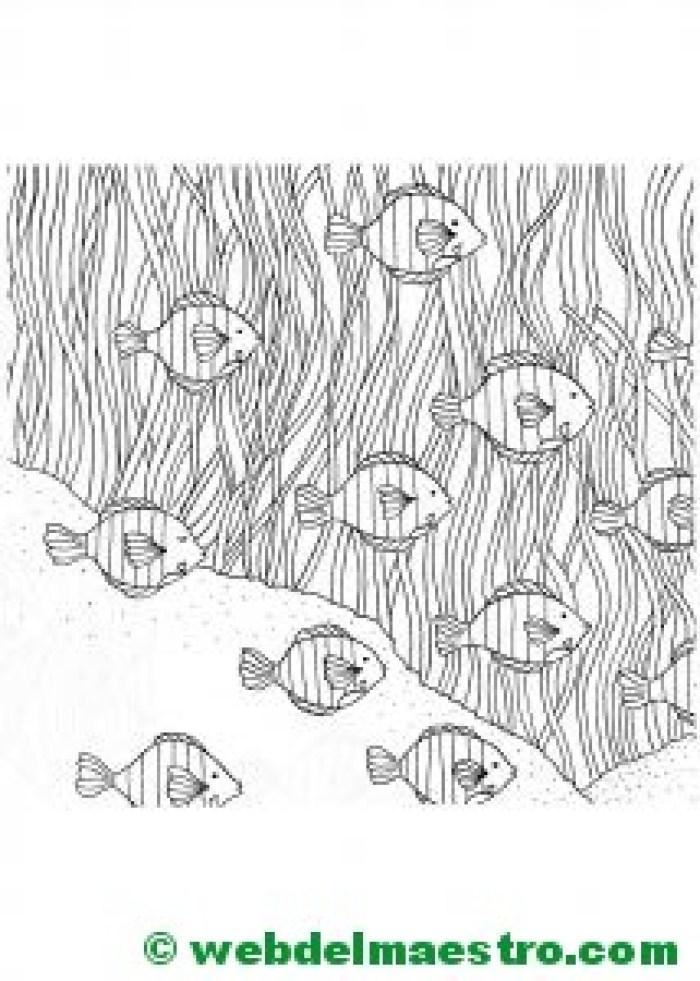 Dibujos antiestrés-Peces payaso