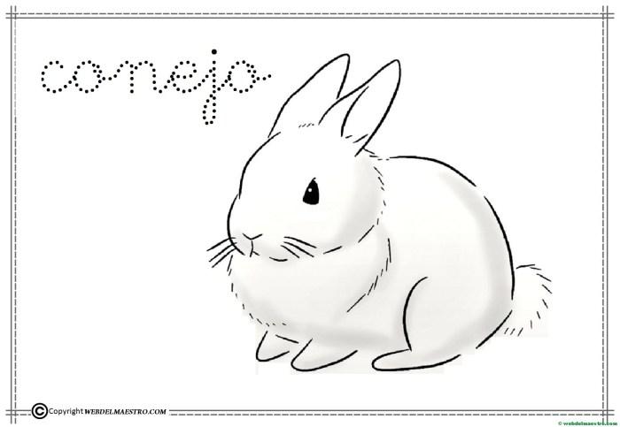 4-conejo