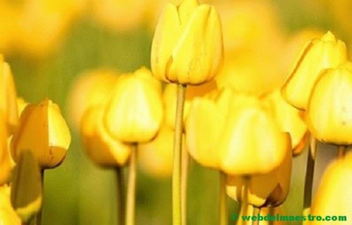 Color amarillo-