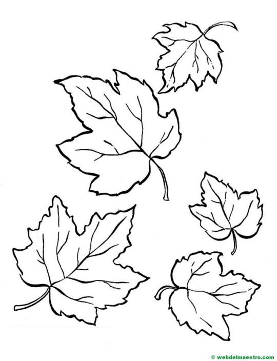 hojas de otoño para colorear-