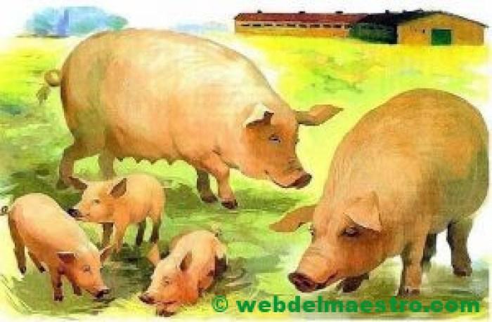 Cerdos macho y hembra y sus lechones