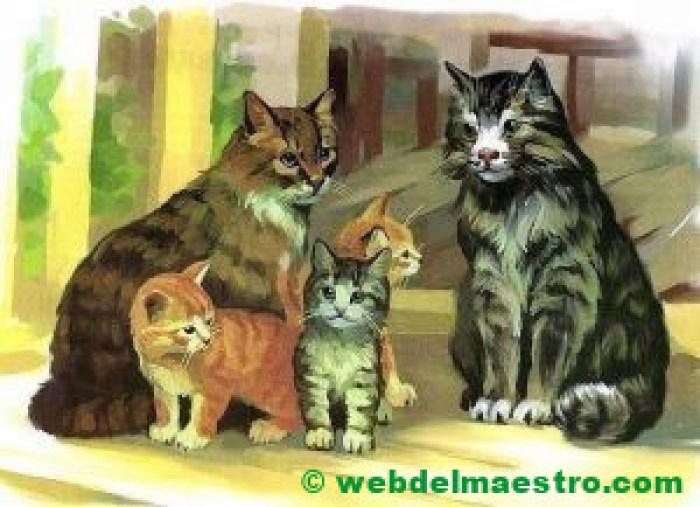 Gato, gata y gatitos