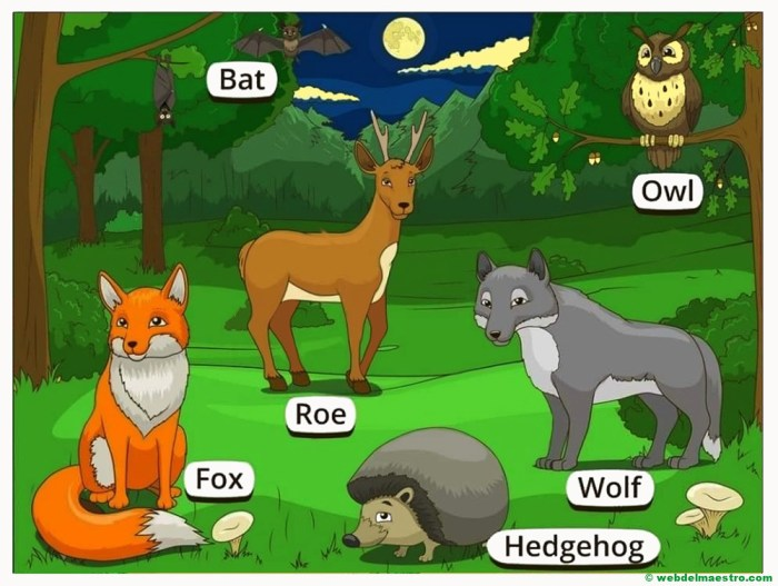 animales del bosque en ingles