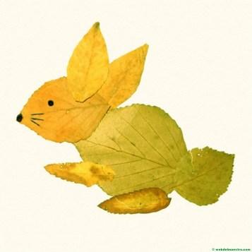 conejo-