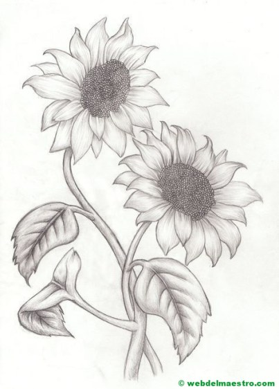 Dibujo a lápiz de girasoles