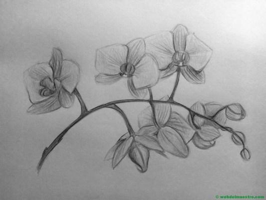 Dibujo a lápiz de orquídeas