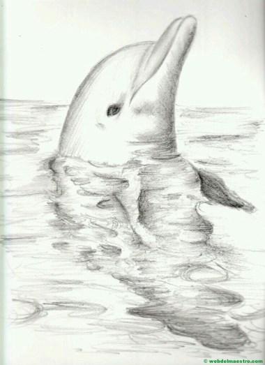 dibujo de delfín a lápiz
