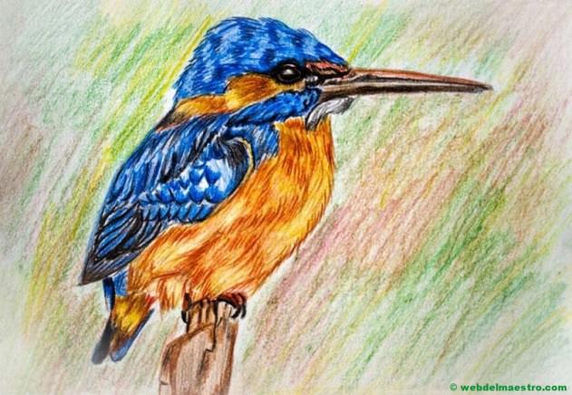 dibujo de pájaro a lápiz de color