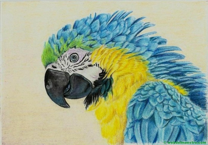 dibujo de papagayo a lápiz de color-