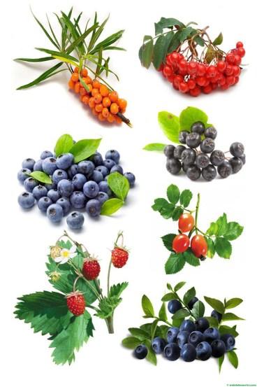 frutos del bosque y bayas